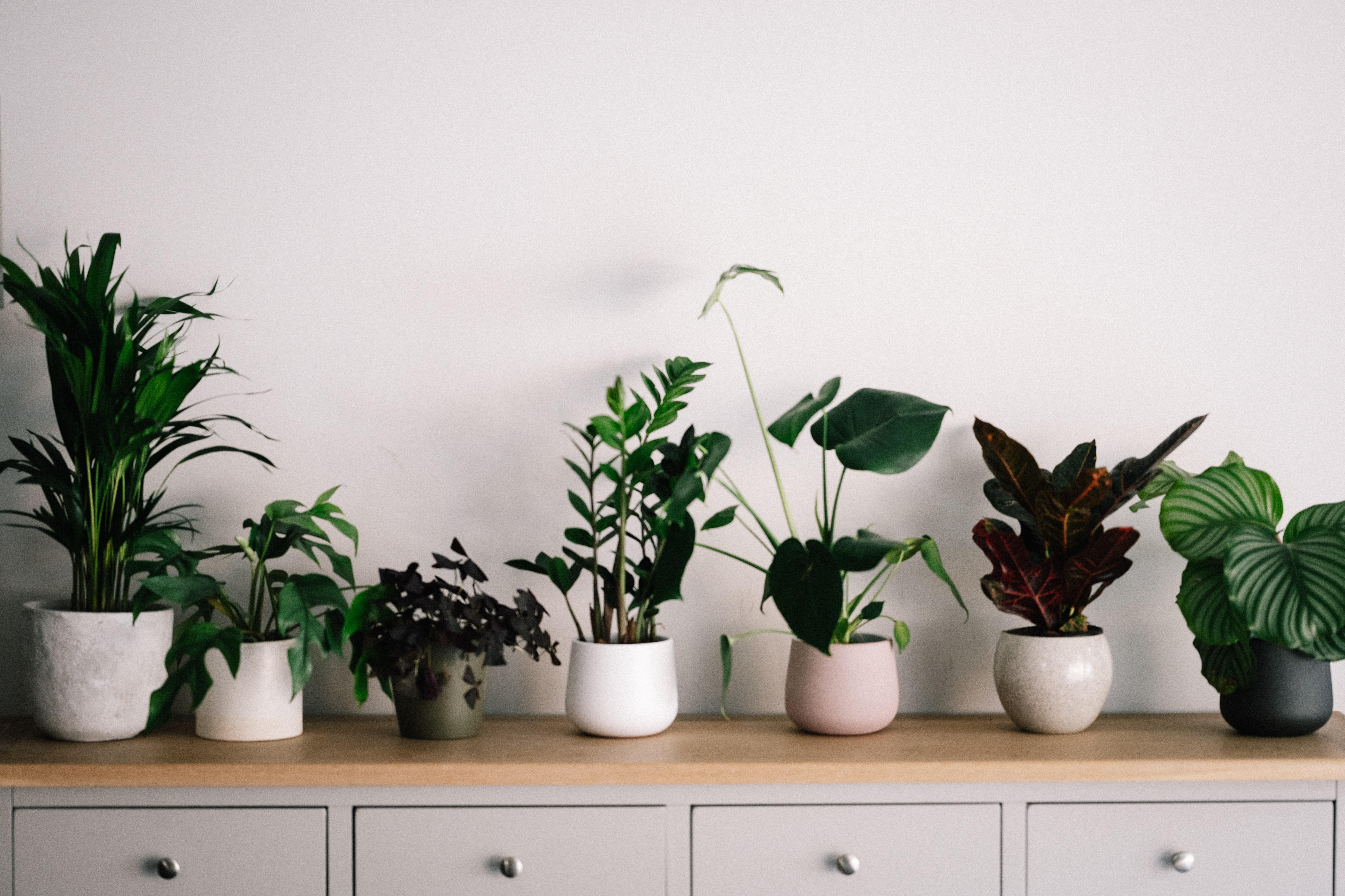 Uribe Schwarzkopf -uSpots - plantas de interiores